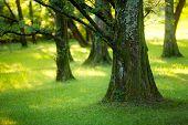 Yews Wood