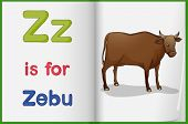 pic of zebu  - Illustration of a zebu in a book on a white background - JPG