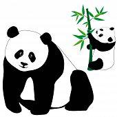 Set Of Cute Panda Bears With Bamboo