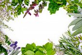 Freshly harvested herbs, herbs frame over white background (space for text)