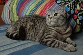 Portrait of a tabby cat
