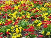 Yellow And Red Flowers Carpet
