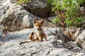 Little Fox In The Wildlife