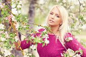 Beautiful blond  girl and blooming  apple tree, amazing spring photo from Latvia, Baltic states, Europe