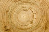 Cut Log Woodgrain Texture