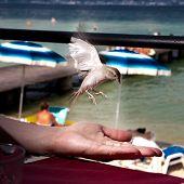 Bird and hand