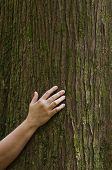 Hand On Cedar Tree Trunk