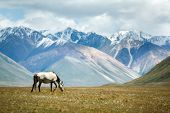 Horse on colorful mountains background
