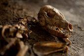 Old Abandoned Dog Skeleton On The Ground