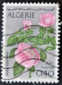Algeria Circa 1973: Stamp Printed In Algeria Shows Rosa Odorata, Circa 1973