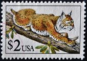 United States Of America - Circa 1990: A Stamp Printed In Usa Shows Bobcat In Tree, Circa 1990