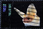 United States Of America - Circa 2002: A Stamp Printed In Usa Shows Pallid Bat, Circa 2002