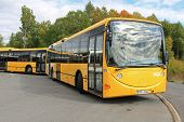 Two Yellow Urban City Buses