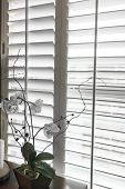 Plantation style elegant shutters window treatment for stylish home