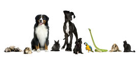 picture of cat dog  - Group of pets in a raw  - JPG