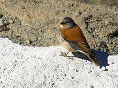 Andean Bird