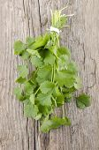 Fresh Coriander On Rustic Wood