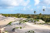 stock photo of natal  - Sand dunes with palms Pititinga Natal  - JPG