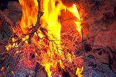Campfire close up with burning bush