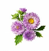 Aster Flowers Composition