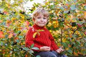 Funny Little Preschool Boy Sitting On A Wall In Late Summer Evening Park, Outdoors
