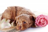 Puppy On A Rug With A Pink Rose