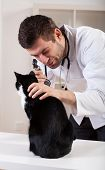 stock photo of otoscope  - Black cat during otoscope examination with vet - JPG