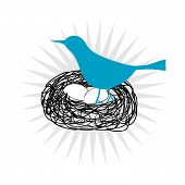 picture of bird-nest  - Blue bird icon sitting in a nest on its eggs in vector format - JPG