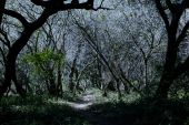 Haunted Halloween Forrest
