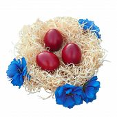 Easter eggs in nest with flowers