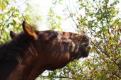 Horse's face outdoors