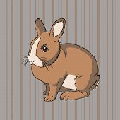 Fluffy brown sitting rabbit