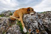 cute dog resting on rocks