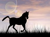 Concept or conceptual young beautiful black horse silhouette in grass or meadow over a sky at sunset