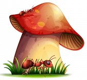pic of face-fungus  - Illustration of a closeup red mushroom - JPG