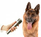 Cute dog with microphone isolated on white