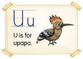 Illustration of a flashcard with letter U