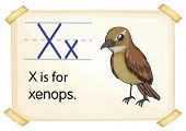Illustration of a flashcard with letter X