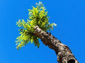young shoot of a pruned tree. above blue sky