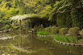 White flowers of Wisteria growing on the wooden pergolas at the shore in a Japanese garden near Heia