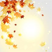 Falling maple leaves. Autumn vector illustration. Copy space.Raster version.