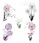 Dandelions. Raster copy