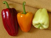 three sweet different peppers on napkin