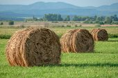 Dry hay bale on green meadow
