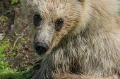 Bear Cub eyes