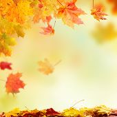 Colored autumn leaves falling down. Blur abstract background for copy space