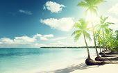 palms and Caribbean beach