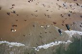 A Birdseye View Of The Tourists Holidaying And Having Fun With Beach Sports In Goa