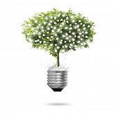Close up  Tree Light bulb isolated