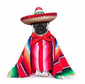 picture of mexican-dog  - mexican dog with sombrero and a big poncho - JPG